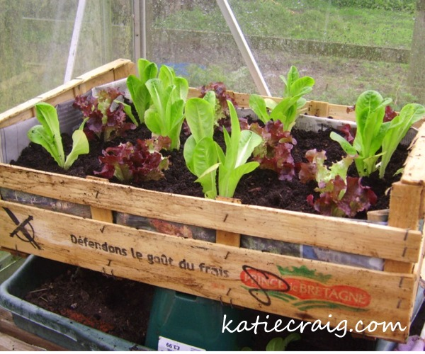 Container Gardening - Make a Wooden Crate Planter
